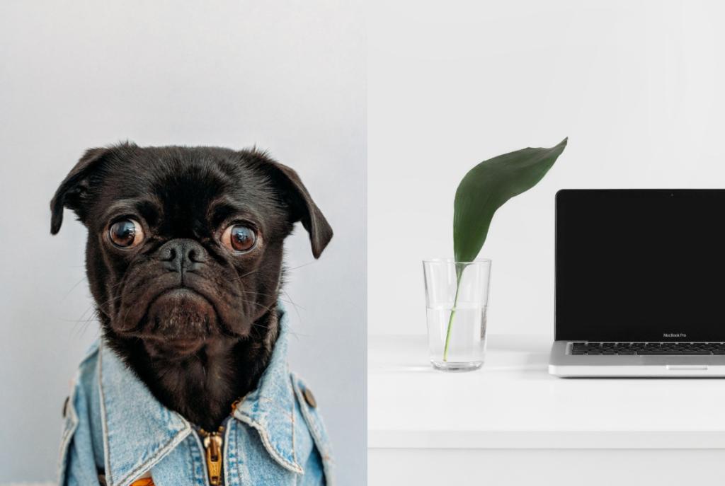 partenariat-blogueur-marque-remuneration